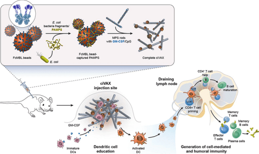 Biomaterial-Based Vaccine Against Bacterial Infection 4