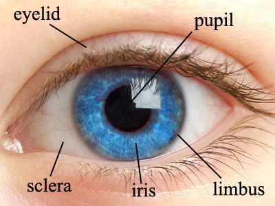 human eye diagram label worksheet home cable tv wiring iris function | med health daily