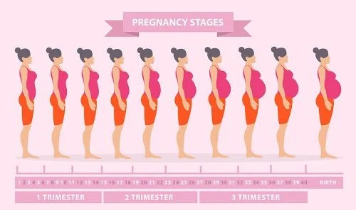 How Many Weeks Pregnant Am I?   Med Health Daily