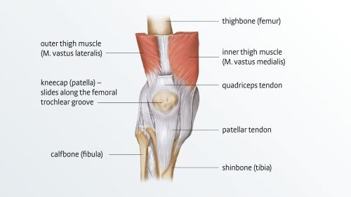 small resolution of anatomy of the knee joint