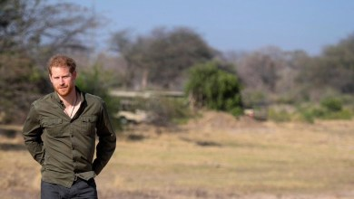 Photo of Prince Harry to donate US$8 million to a Zimbabwe National Park