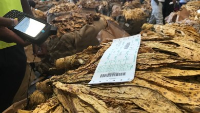 Photo of Zimbabwe tobacco sales hit US$108.54mln in the last 22 days
