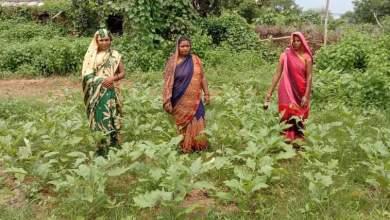 Photo of Women distribute veggies grown in kitchen gardens during lockdown