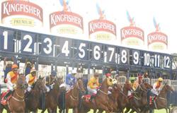 kingfisher-derby