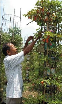 menanam sayur dengan hidroponik
