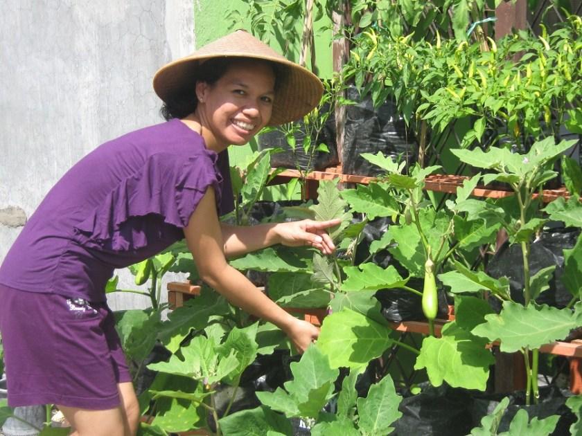 pemeliharaan tanaman organik