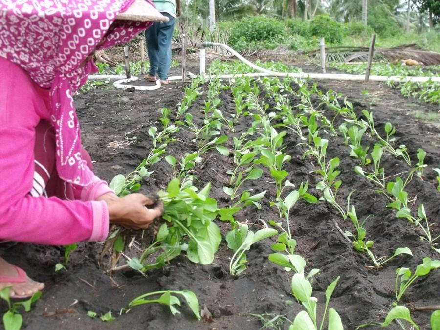 bibit tanaman organik