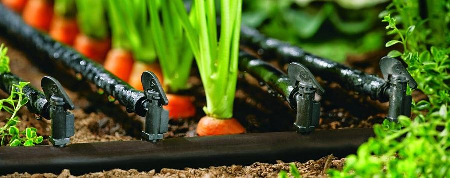 pengairan tanaman organik