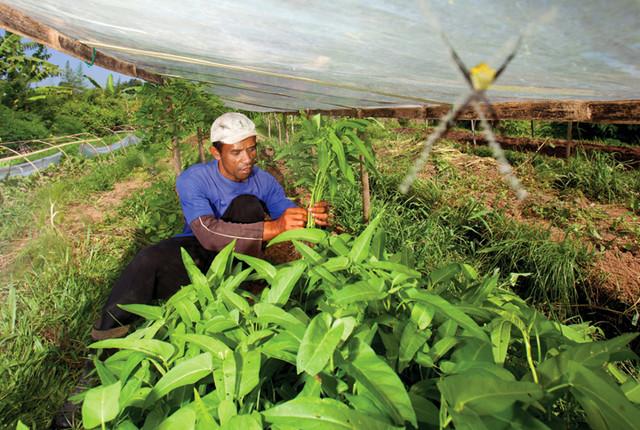 sayuran ramah lingkungan