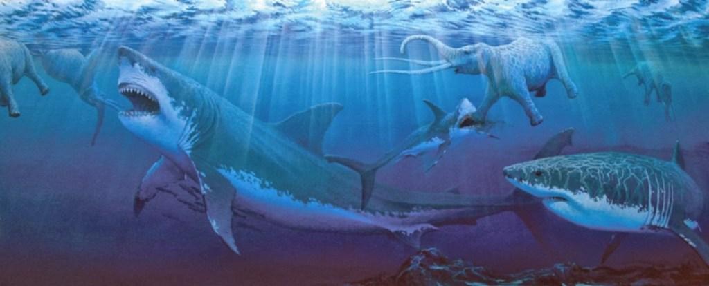 ikan hiu raksasa