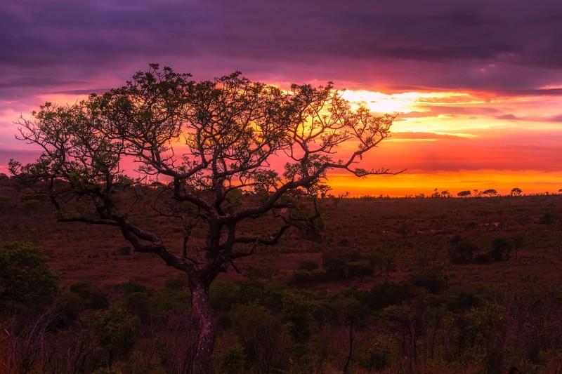 Pemandangan Senja Afrika
