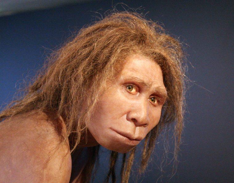 manusia purba jenis pitecanthropus mojokertensis