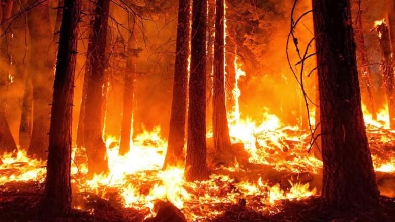 membakar hutan untuk membukka lahan