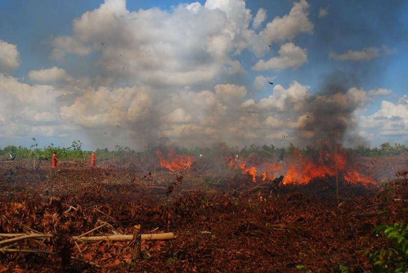 adanya pembakaran lahan gambut