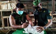 Permalink ke Babinsa Kodim Pekalongan, Inpirastif Sukses Ternak Kelinci Hias