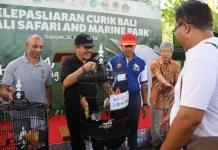 Wakil Gubernur Bali Tjokorda Oka Artha Ardana Sukawati melepasliarkan burung Curik Bali di Bali Safari & Marine Park, Gianyar