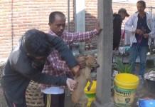 Dinas Peternakan Jembrana Sisir Anjing untuk di Vaksin Anti Rabies
