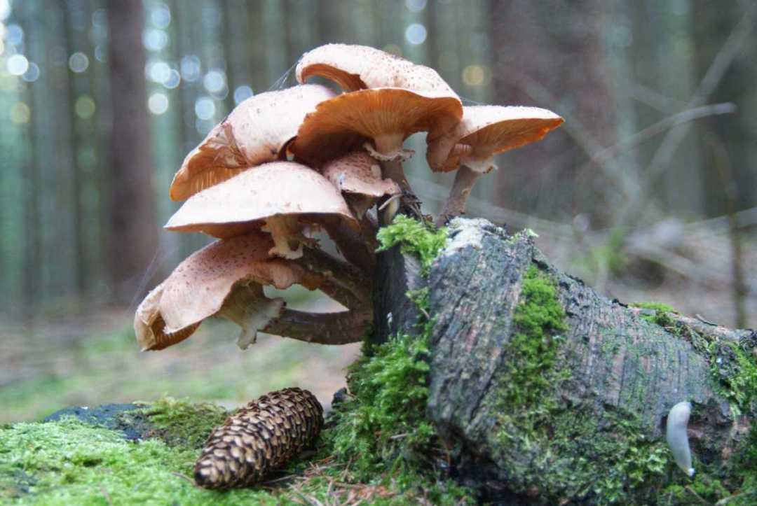 Les champignons - Portfolio de Francis Gengoux