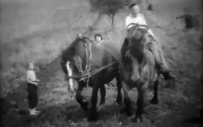 Travaux des champs,Thin le Moutier 1960