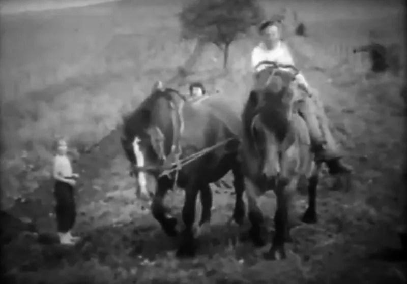 attelage de chevaux 1960