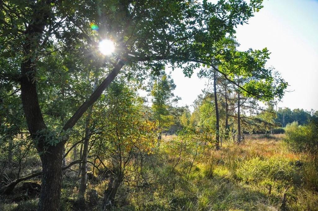 La réserve des Qautre-Vents à la pointe de l'automne