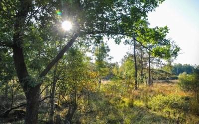 La réserve naturelle des Quatre-Vents | Vielsalm
