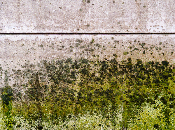 A wall with green mold slowing extending upward.