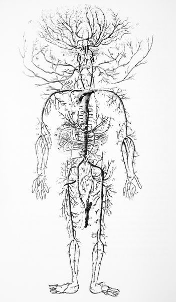 Arterial system, 18th century. Artwork of the layout and