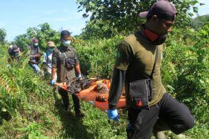 Proyek PLTA Didanai China Ancam Habitat Orangutan Terlangka di Dunia