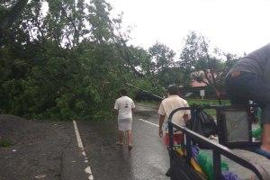 Pohon Tumbang di Panciro, Jalan Poros Gowa Takalar Tersendat