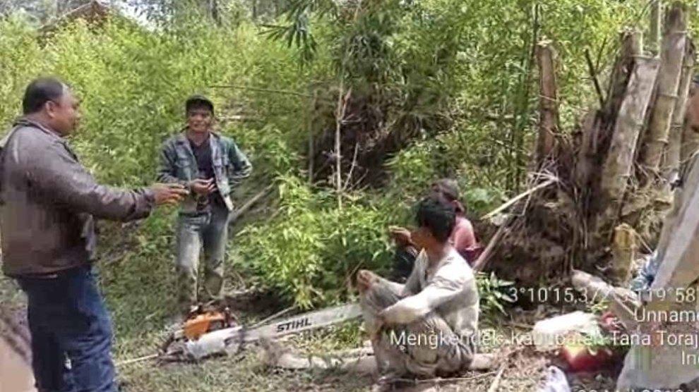 Pelaku Perambahan Hutan di Tator, Berhasil Ditangkap Polhut