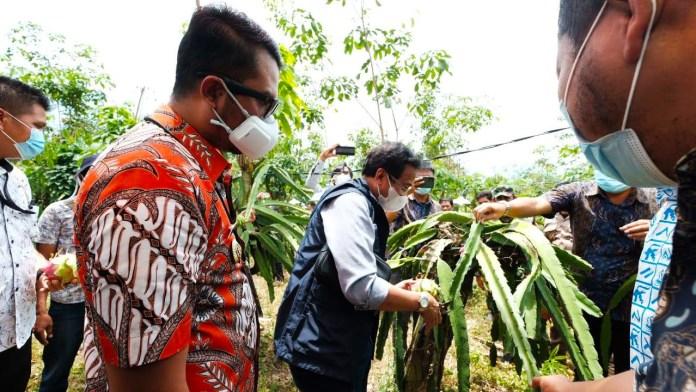 PLN Dongkrak Penghasilan Petani Buah Naga Lewat Program 'Cahaya untuk Sang Naga'