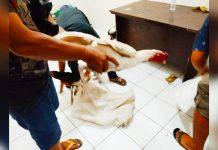 Polsek Bontonompo Grebek Judi Sabung Ayam yang Resahkan Warga
