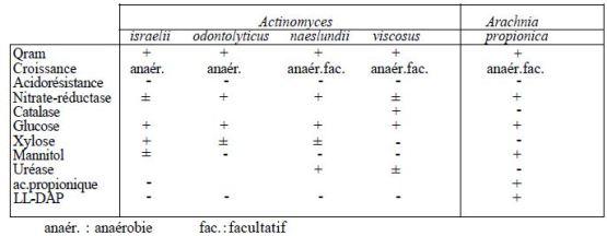 TABLEAU II : principaux caractères d'identification des Actinomycètes « Anaérobies »