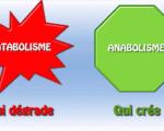 Métabolisme protéique