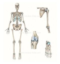 full skeleton knee shoulder foot compilation [ 1024 x 1024 Pixel ]