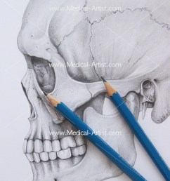 pencil medical illustration graphite coloured pencil art services eye glass diagram diagrams of art pencils [ 800 x 1096 Pixel ]