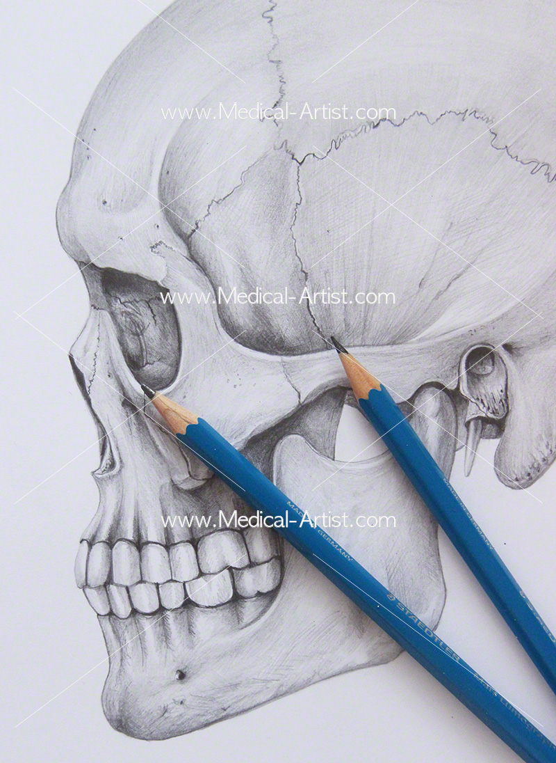 medium resolution of pencil medical illustration graphite coloured pencil art services eye glass diagram diagrams of art pencils