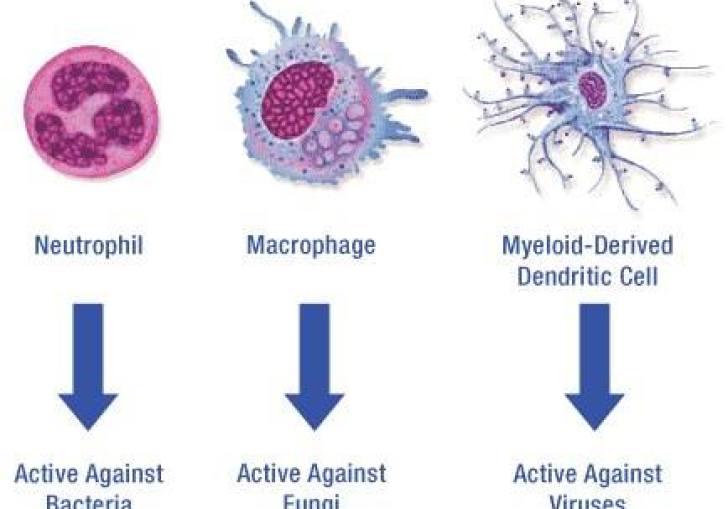 Cell Diagram Chemistry