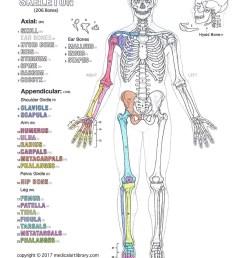 human skeleton diagram for coloring [ 835 x 1080 Pixel ]