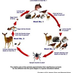 Lion Life Cycle Diagram Pioneer Avh 288bt Qual Formato De Video Medical Ecology >> Infectious Diseases Influenza
