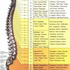 Cervical Vertebrae Diagram Wiring Yfm400fwn Spinalnervefunctionjpg_page1 - Medical Estudy
