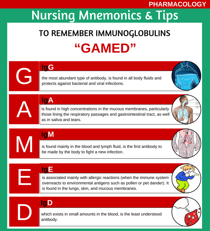5 Types of Immunoglobulins Mnemonic - Medical eStudy
