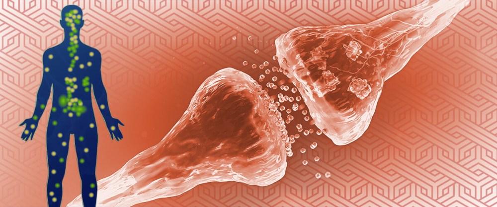 cannabinoid receptors and pain