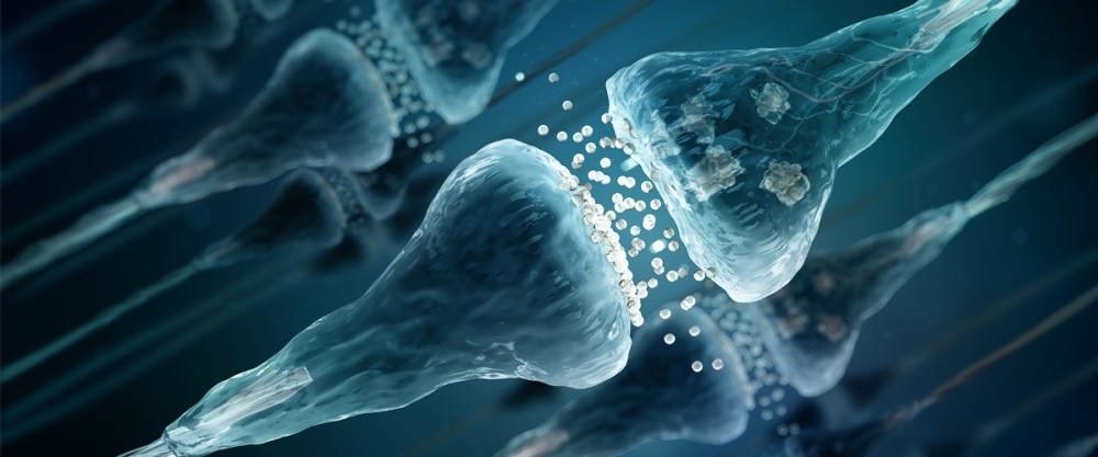 cannabinoid receptors function
