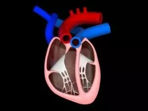 reduce cardiovascular risk