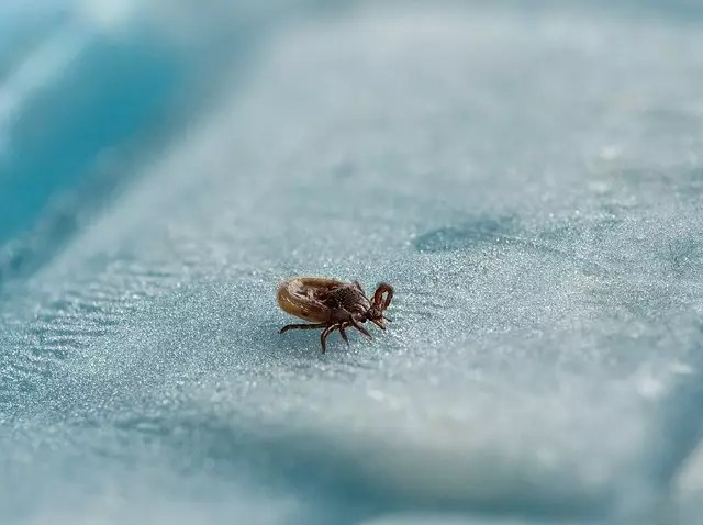 Can Lyme disease be diagnosed at an early stage? - Medical