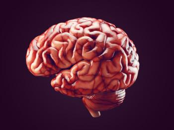 [Realistic brain illustration]