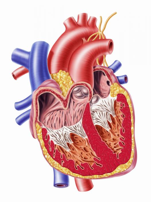 anatomical heart diagram condenser fan motor wiring hypoglycemia: causes, diagnosis and treatment - medical news today