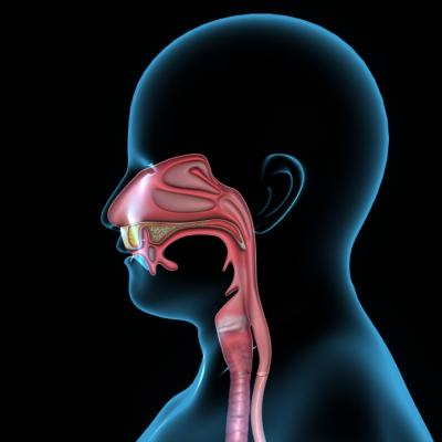 diagram of mouth and throat 1997 buick lesabre belt cancer: get the facts - medical news today